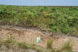 Sous-sol de fougères. Source : http://data.abuledu.org/URI/594a9607-sous-sol-de-fougeres