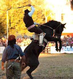 Spectacle de rodéo en Uruguay. Source : http://data.abuledu.org/URI/5501fb49-spectacle-de-rodeo-en-uruguay