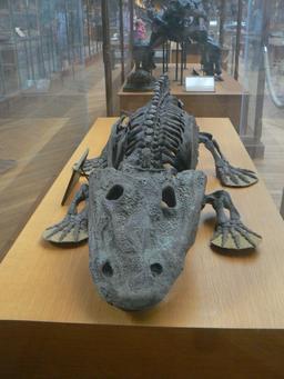 Squelette d'Eryops megacephalus. Source : http://data.abuledu.org/URI/541d97c3-squelette-d-eryops-megacephalus