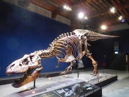 Squelette de tyrannosaure. Source : http://data.abuledu.org/URI/5857019d-squelette-de-tyrannosaure
