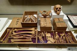 Squelette humain japonais en bois. Source : http://data.abuledu.org/URI/593703b8-squelette-humain-japonais-en-bois