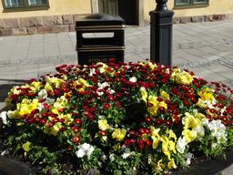 Stockholm, parterre de fleurs. Source : http://data.abuledu.org/URI/563154ec-stockholm-parterre-de-fleurs