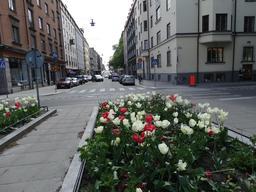 Stockholm, parterre de tulipes en ville. Source : http://data.abuledu.org/URI/5631552e-stockholm-parterre-de-tulipes-en-ville