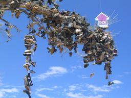 Street art et l'arbre à chaussures. Source : http://data.abuledu.org/URI/5546017b-street-art-et-l-arbre-a-chaussures