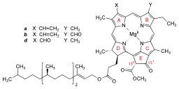 Structure de la chlorophylle a, b et d. Source : http://data.abuledu.org/URI/50e41886-structure-de-la-chlorophylle-a-b-et-d