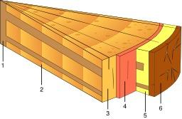 Structure du bois. Source : http://data.abuledu.org/URI/51574808-structure-du-bois