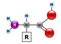 Structure générale des acides aminés. Source : http://data.abuledu.org/URI/50ce32ab-structure-genetique-des-acides-amines