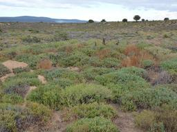 Suricates dans une zone semi-désertique. Source : http://data.abuledu.org/URI/52d1b788-suricates-dans-une-zone-semi-desertique