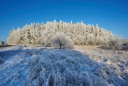 Suur Munamägi en Estonie au mois de Novembre. Source : http://data.abuledu.org/URI/5504b263-suur-munamagi-en-estonie-au-mois-de-novembre