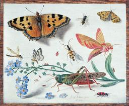 Tableau d'insectes en 1653. Source : http://data.abuledu.org/URI/54d11948-tableau-d-insectes-en-1653