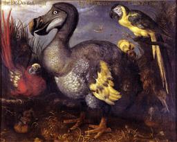 Tableau du Dodo. Source : http://data.abuledu.org/URI/573acaa8-tableau-du-dodo