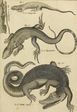 Tableau encyclopédique et méthodique des trois règnes de la nature. Source : http://data.abuledu.org/URI/56ca34ce-tableau-encyclopedique-et-methodique-des-trois-regnes-de-la-nature
