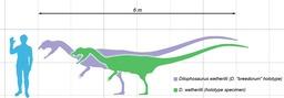 Taille du Dilophosaurus. Source : http://data.abuledu.org/URI/512299e9-taille-du-dilophosaurus