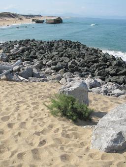 Tamaris pionnier dans les dunes de Capbreton. Source : http://data.abuledu.org/URI/582eb62d-tamaris-pionnier-dans-les-dunes-de-capbreton