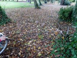 Tapis de feuilles mortes en octobre. Source : http://data.abuledu.org/URI/5822e6e5-tapis-de-feuilles-mortes-en-octobre