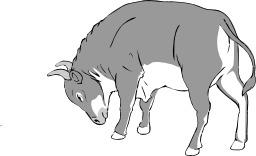 Taureau. Source : http://data.abuledu.org/URI/5049a6c6-taureau