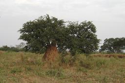 Termitière en Casamance. Source : http://data.abuledu.org/URI/54935c35-termitiere-en-casamance