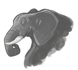 Tête d'éléphant. Source : http://data.abuledu.org/URI/572b765a-tete-d-elephant