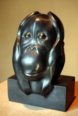 Tête d'orang-outang. Source : http://data.abuledu.org/URI/52b20168-tete-d-orang-outang