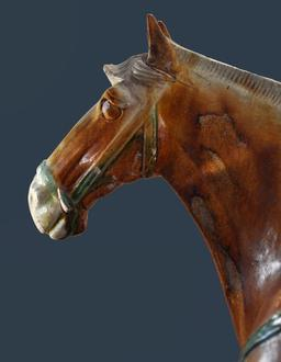 Tête de cheval. Source : http://data.abuledu.org/URI/52e1349e-tete-de-cheval