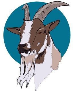 Tête de chèvre. Source : http://data.abuledu.org/URI/5049b5f4-tete-de-chevre