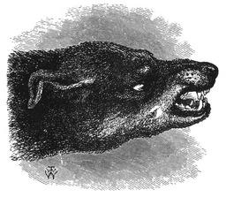 Tête de chien agressif. Source : http://data.abuledu.org/URI/532c89cf-tete-de-chien-agressif
