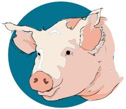 Tête de cochon. Source : http://data.abuledu.org/URI/5049c671-tete-de-cochon