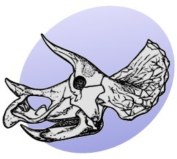 Tête de squelette de dinosaure. Source : http://data.abuledu.org/URI/5049f6fc-tete-de-squelette-de-dinosaure