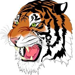 Tête de tigre. Source : http://data.abuledu.org/URI/5049b52e-tete-de-tigre