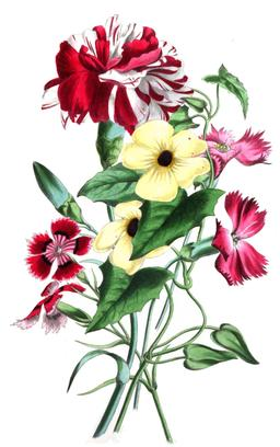 Composition florale en 1836. Source : http://data.abuledu.org/URI/53ecf490-theromanceofnature-0275-jpg