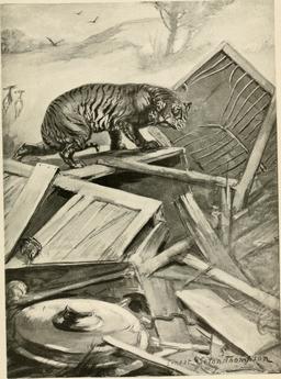Tigre dans une décharge. Source : http://data.abuledu.org/URI/587e10b7-tigre-dans-une-decharge