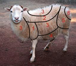 Toison de laine de mouton. Source : http://data.abuledu.org/URI/512a3421-toison-de-laine-de-mouton