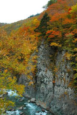 Torrent japonais en automne. Source : http://data.abuledu.org/URI/5273cd41-torrent-japonais-en-automne