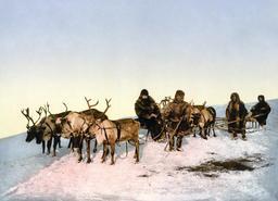 Traineau de rennes en Russie. Source : http://data.abuledu.org/URI/52b0d459-traineau-de-rennes-en-russie