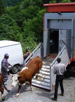 Transhumance du bétail des cols alpins. Source : http://data.abuledu.org/URI/53687162-transhumance-du-betail-des-cols-alpins