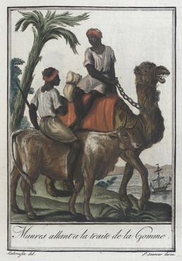 Transport de gomme arabique. Source : http://data.abuledu.org/URI/549df3a3-transport-de-gomme-arabique