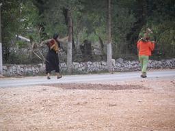 Transport du bois en Albanie. Source : http://data.abuledu.org/URI/55615d12-transport-du-bois-en-albanie-