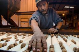 Tri manuel des noix de pécan après récolte. Source : http://data.abuledu.org/URI/5656e402-tri-manuel-des-noix-de-pecan-apres-recolte