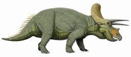Triceratops. Source : http://data.abuledu.org/URI/563b2947-triceratops