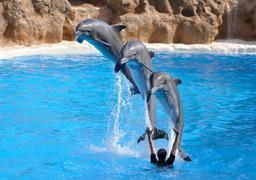 Trois dauphins. Source : http://data.abuledu.org/URI/501b13e7-trois-dauphins