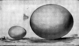 Trois oeufs. Source : http://data.abuledu.org/URI/54ee5329-trois-oeufs