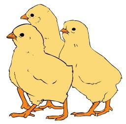 Trois poussins. Source : http://data.abuledu.org/URI/5049b062-trois-poussins