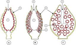 Trois types d'éponges. Source : http://data.abuledu.org/URI/56c9c407-trois-types-d-eponges