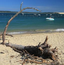 Tronc de pin échoué au Mimbeau. Source : http://data.abuledu.org/URI/55a82084-tronc-de-pin-echoue-au-mimbeau