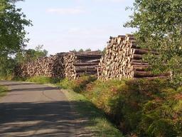 Troncs de pins stockés en bord de route. Source : http://data.abuledu.org/URI/513217ad-troncs-de-pins-stockes-en-bord-de-route