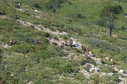 Troupe de bouquetins en Tarragone. Source : http://data.abuledu.org/URI/52cf1890-troupe-de-bouquetins-en-tarragone