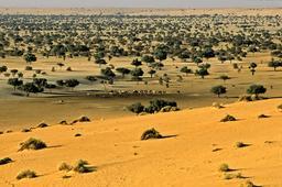Troupeau dans le Termit au Niger. Source : http://data.abuledu.org/URI/54d2362b-troupeau-dans-le-termit-au-niger