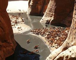 Troupeau de dromadaires dans le Sahara. Source : http://data.abuledu.org/URI/54d224a0-troupeau-de-dromadaires-dans-le-sahara