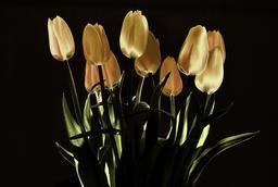 Tulipes en nocturne. Source : http://data.abuledu.org/URI/53af31f5-tulipes-en-nocturne