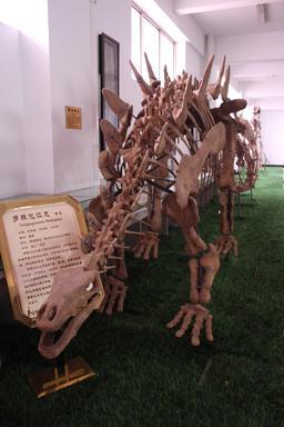 Tuojiangosaurus (lézard de la rivière Tuo) multispinus. Source : http://data.abuledu.org/URI/47f50df9-tuojiangosaurus-lezard-de-la-riviere-tuo-multispinus